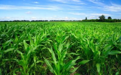 7 proposte per l'agricoltura sostenibile del futuro