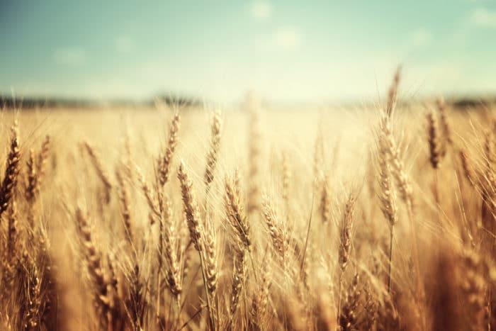 10 alimenti ricchi di fosforo