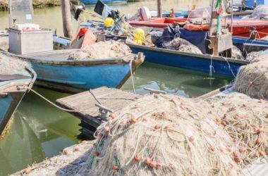 Pesce di mare o pesce di allevamento: quali sono le differenze?