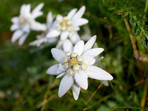 Photo of Giardini botanici in Valle d'Aosta: paradisi da visitare