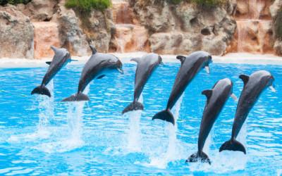Cosa succede ai delfini nei delfinari? Un rapporto LAV ce lo dice