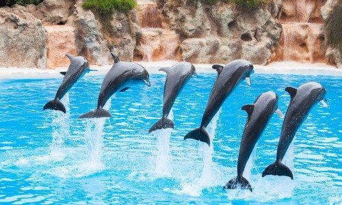 Photo of Cosa succede ai delfini nei delfinari? Un rapporto LAV ce lo dice