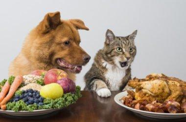 Sai quali sono i cibi pericolosi per gatti e cani?