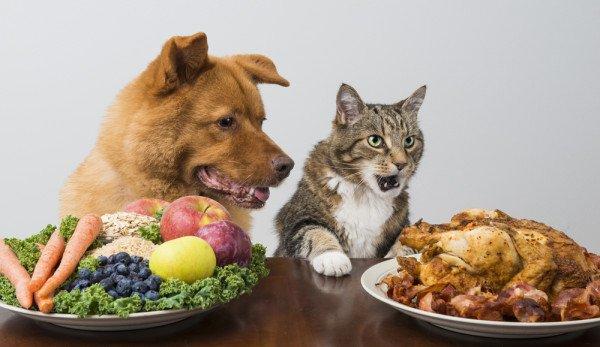 cibi pericolosi per gatti e cani