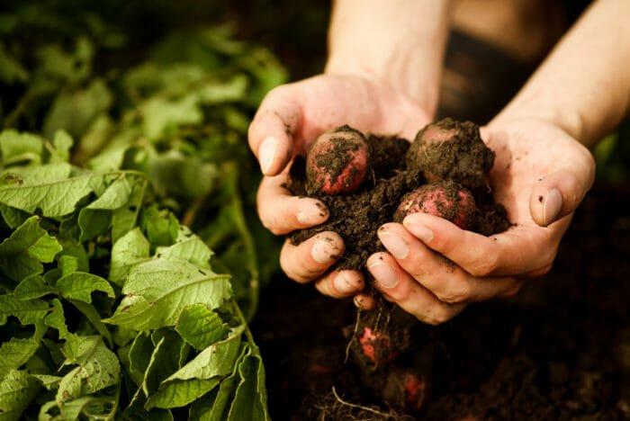 Cos'è l'agricoltura rigenerativa