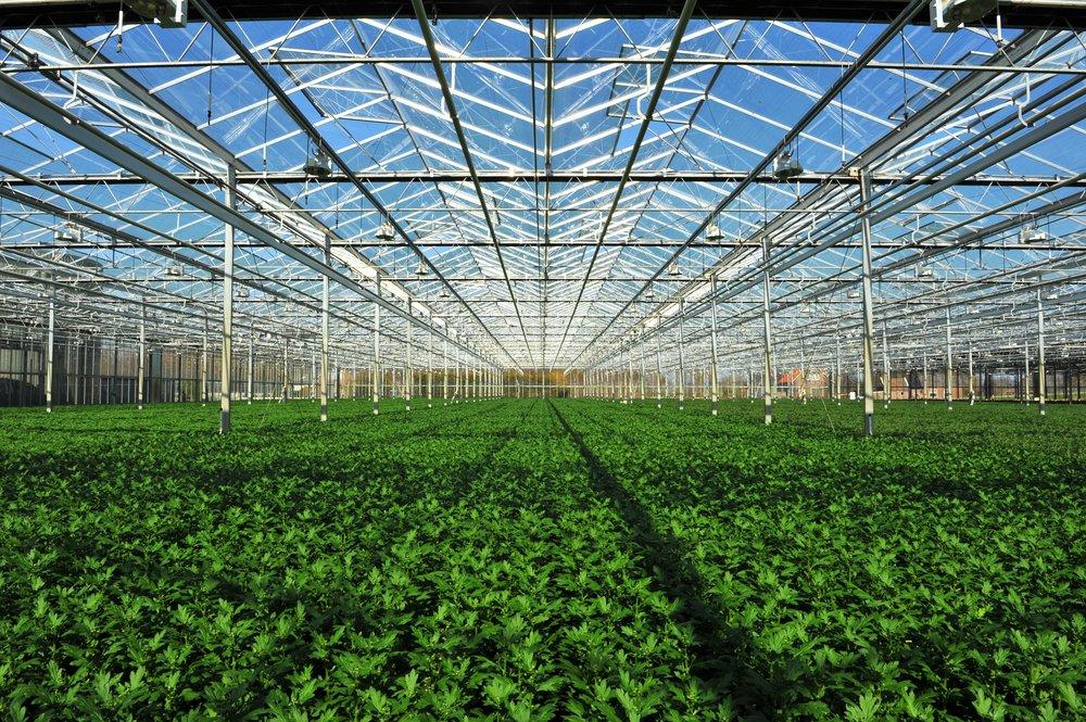 Photo of Cos'è meglio: i prodotti locali coltivati in serra o quelli lontani ma bio?