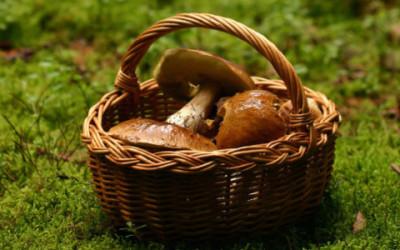Funghi velenosi: come riconoscerli e quali sono