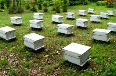 Sappiamo davvero come viene prodotto il miele? Eccolo spiegato in modo semplice.