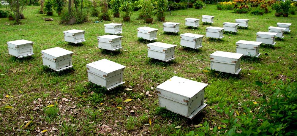 Photo of Sappiamo davvero come viene prodotto il miele? Eccolo spiegato in modo semplice.