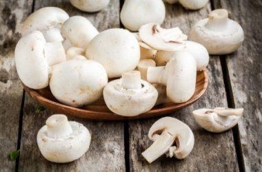 Funghi champignon, proprietà e utilizzi