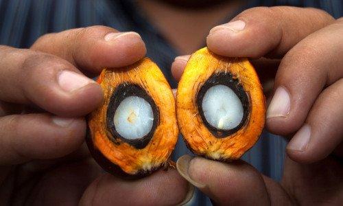 Photo of L'olio di palma nocivo per salute e ambiente ma può essere più sostenibile?