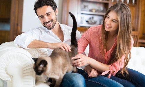 Photo of 5 cose da sapere per chi vuole adottare un gatto