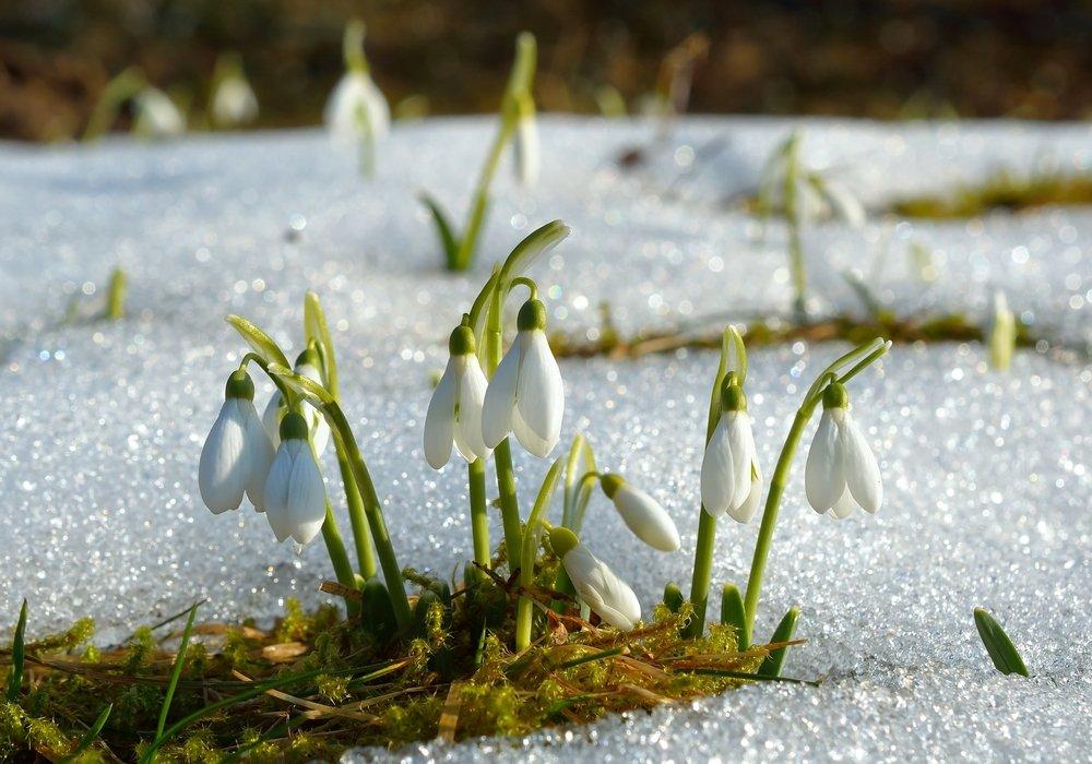 Fiori Invernali Bianchi.Fiori Invernali Quali Sono E Come Coltivarli