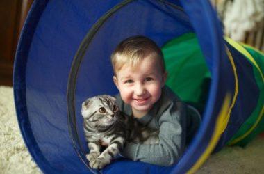 I consigli pratici per i nostri giochi con gatti