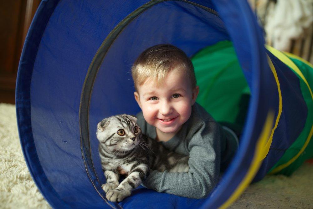 Photo of I consigli pratici per i nostri giochi con gatti