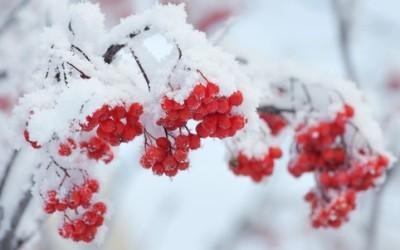 I consigli per difendere le piante dal freddo e affrontare l'inverno con successo