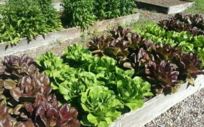Orto in affitto a Roma: adozione a distanza di un orto per mangiarne i prodotti