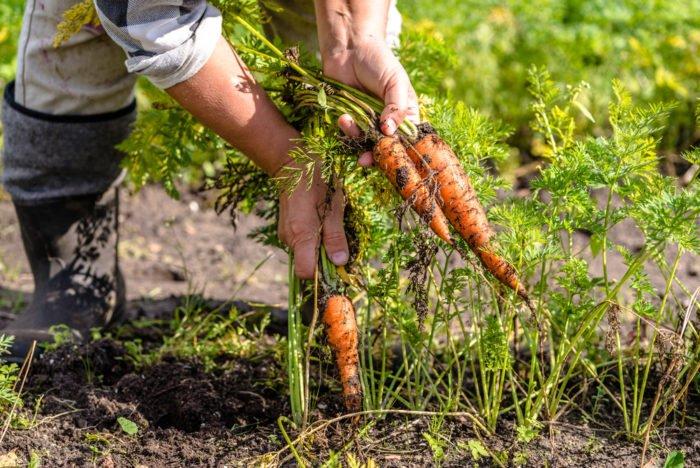agricoltura quantistica