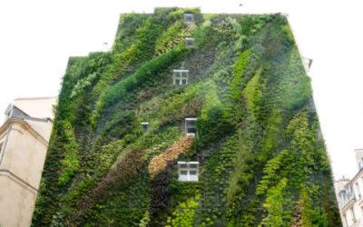 Il giardino verticale: i migliori esempi e le tecniche di questa soluzione per rendere green la città