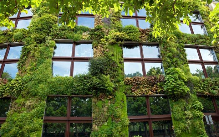 Cosa un giardino verticale tecniche e benefici dei muri vegetali in citt tuttogreen - Giardino verticale in casa ...