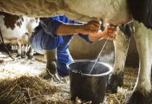 Photo of Latte vaccino: proprietà, caratteristiche e cose da sapere
