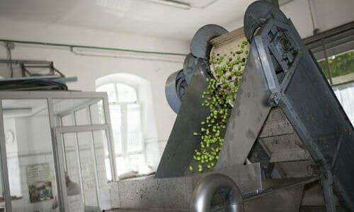 Photo of L'olio extravergine acquistato direttamente dal frantoio: una breve guida