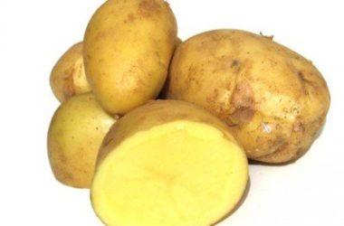 Provate le nostre proposte di ricette con bucce di patate, tanti suggerimenti da non perdere