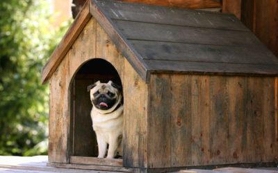 Cucce per cani e gatti, ecologiche, da interno e da giardino