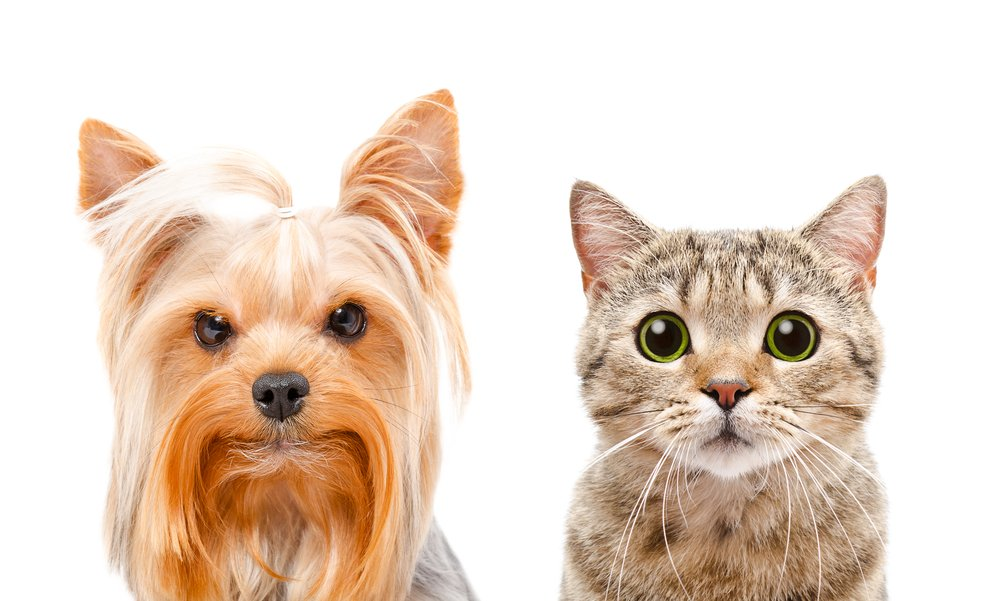 Photo of Campagna promossa dall'Ordine dei medici veterinari contro il fumo passivo per cani e gatti!