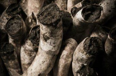 Cos'è l'agricoltura biodinamica e in cosa si differenzia dall'agricoltura biologica