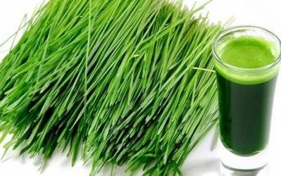 Erba di grano: proprietà e benefici del succo