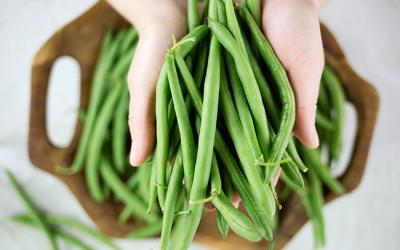 Coltivare fagiolini in vaso e a terra: consigli pratici