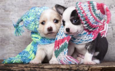 Come curare il raffreddore del cane
