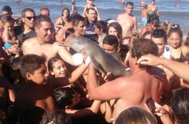 Un delfino e uno squalo morti per la smania di popolarità, che genera mostri di egoismo