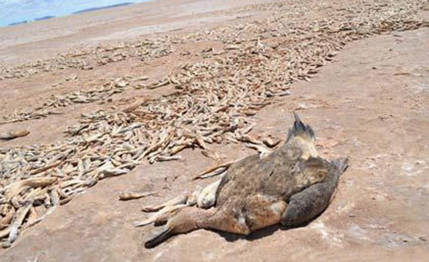 Photo of Sparito un lago in Bolivia: ecco cosa succederà con il combiamento climatico