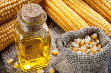 Olio di mais: proprietà e benefici