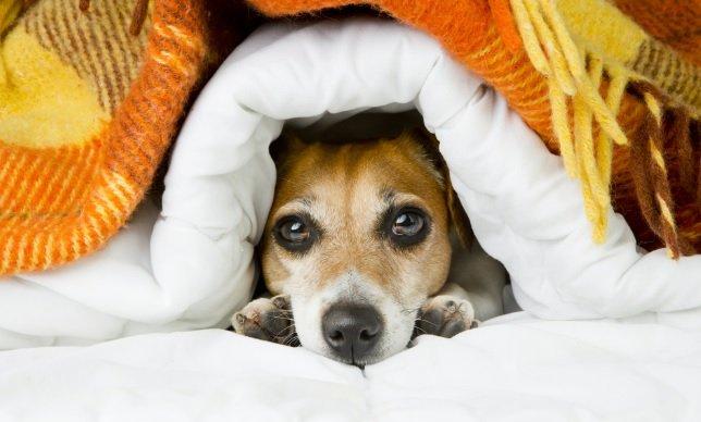Photo of Come curare il raffreddore del cane