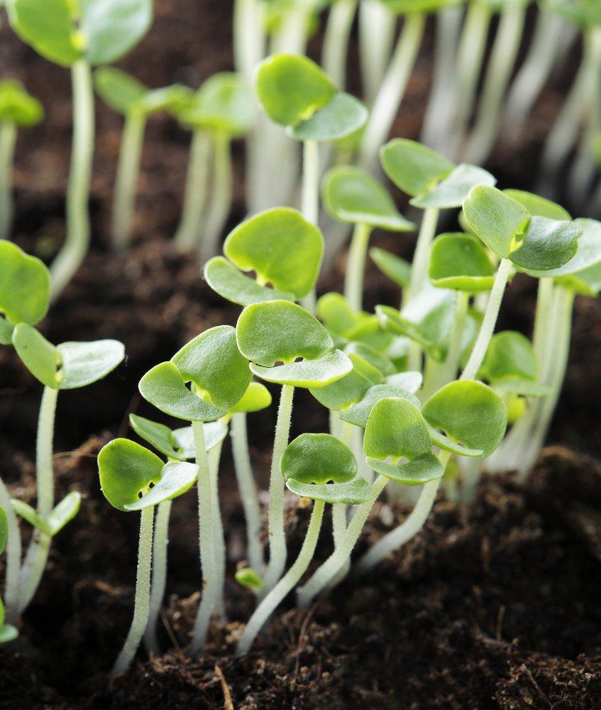 Come coltivare il basilico in vaso e a terra la guida for Coltivare il basilico