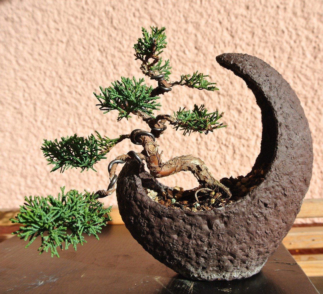 Photo of Come coltivare bonsai
