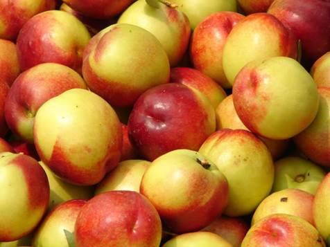 Photo of E' consigliabile mangiare la frutta con la buccia o senza? Ecco come regolarsi