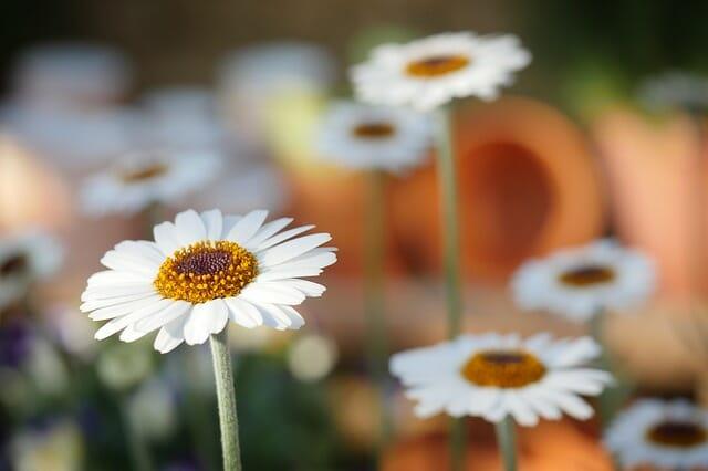 primavera lavori giardino