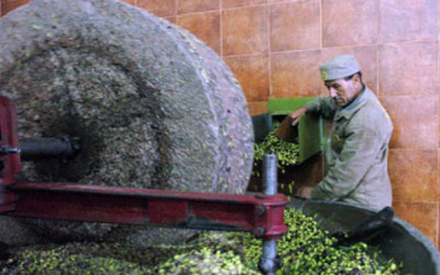 Polemica sull'olio tunisino: il vero problema è la tracciabilità