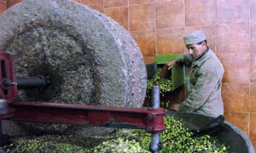Photo of Polemica sull'olio tunisino: il vero problema è la tracciabilità