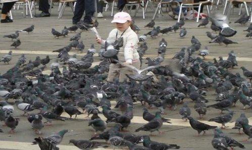 Photo of I piccioni in città: un vademecum della Lipu per gestirli