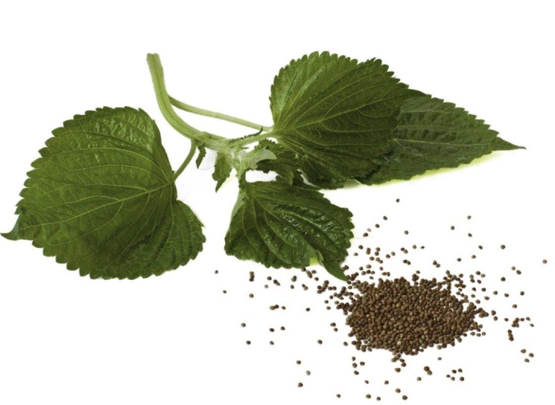 Photo of Olio di perilla: contro il colesterolo, le allergie e gli stati infiammatori