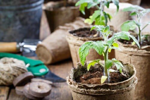 Photo of I lavori dell'orto di marzo: cosa seminare, raccogliere e potare