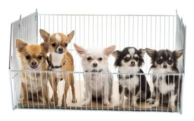 A Boston vietata vendita nei negozi di animali domestici, perfino di cani e gatti