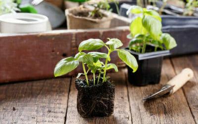 I lavori dell'orto di marzo: cosa seminare, raccogliere e potare