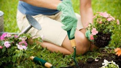 Photo of Scopriamo insieme gli antiparassitari naturali per le vostre piante