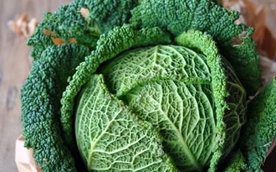 Ricette con verza: piatti vegetariani da provare